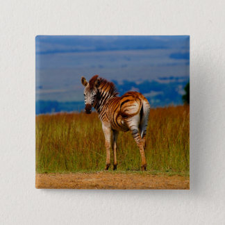 Zebra on the mountain 2 inch square button