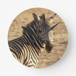 Zebra on the Savannah Clocks