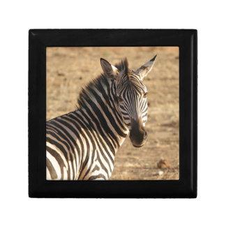 Zebra on the Savannah Jewelry Boxes