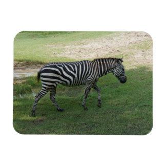 Zebra Photo Magnet