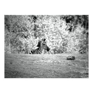 Zebra Photo Print