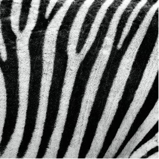 Zebra Cut Out