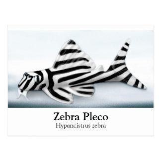 Zebra Pleco Postcard