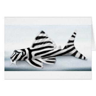 zebra pleco w background copy greeting card