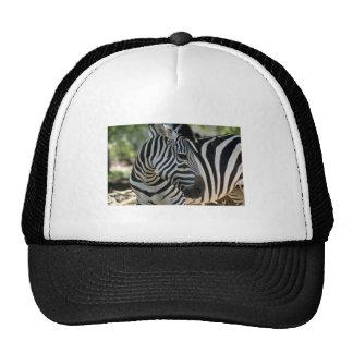 Zebra Pose Hat