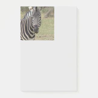 zebra post-it notes