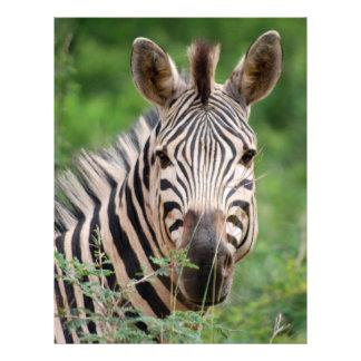 Zebra profile personalized letterhead