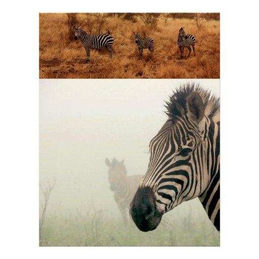 Zebra Safari Cute African Classy Stripes Letterhead