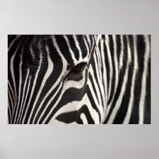 Zebra Stripe Pattern & Eye Poster