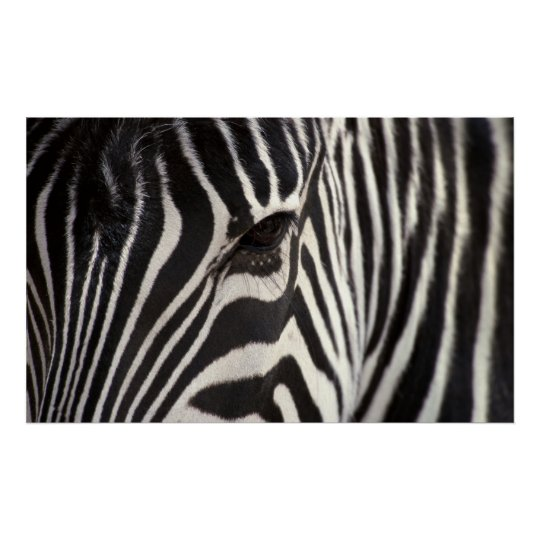 Zebra Stripe Pattern & Eye Poster