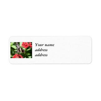 Zebra Striped Butterfly Custom Return Address Label