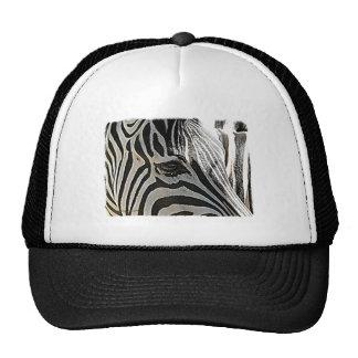 "Zebra ""Stripes"" Hats"