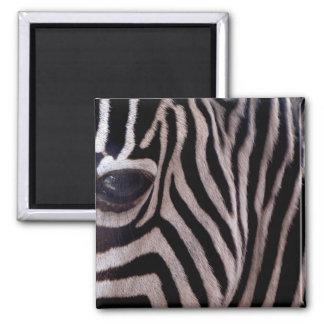 Zebra Stripes Square Magnet