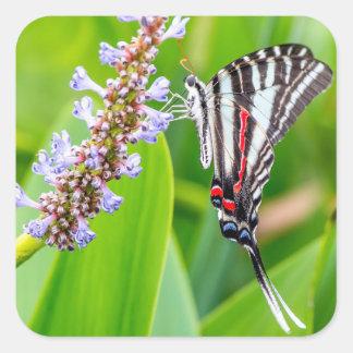 Zebra Swallowtail Butterfly Square Sticker