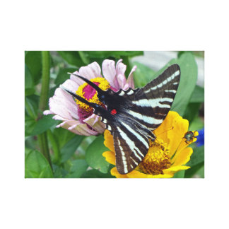 Zebra Swallowtail + Japanese Beetle Canvas Print