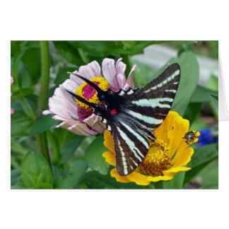 Zebra Swallowtail+Japanese Beetle Card