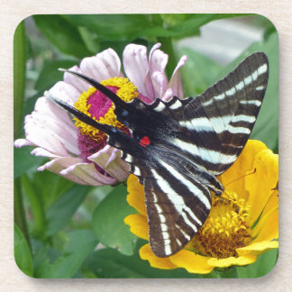 Zebra Swallowtail+Japanese Beetle Drink Coasters