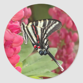 zebra swallowtail round sticker