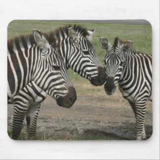 Zebra Talk - Mousepad