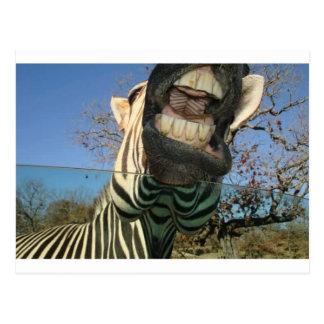 Zebra Teeth Postcard
