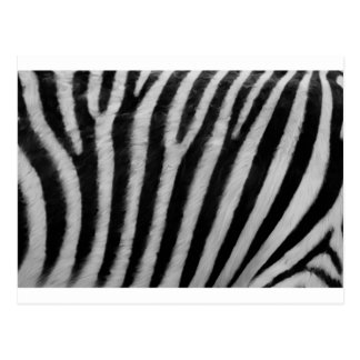 Zebra Texture Postcard