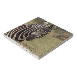 zebra trivet