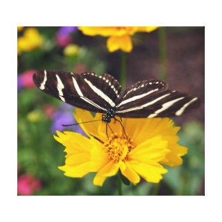 Zebra Wings Canvas Print