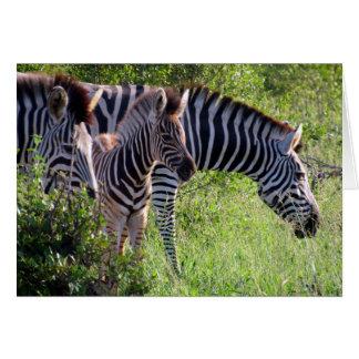 zebra youth card
