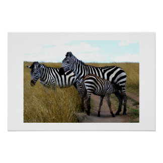 ZEBRAS AND BABY POSTER