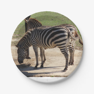 Zebras at the Zoo Paper Plate
