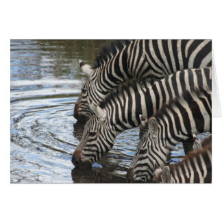 Zebras at Water - Customized Card