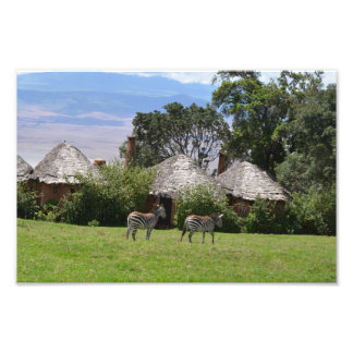 Zebras Grazing in Tanzania Photo Print