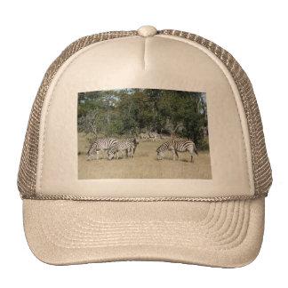 Zebras Mesh Hats