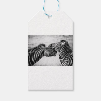 Zebras In Africa Gift Tags