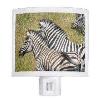 ZEBRAS Night Lights custom Safari Animals Africa