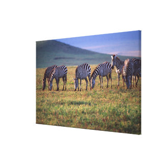 Zebras on the Serengetti Plains at Sunrise, Canvas Print