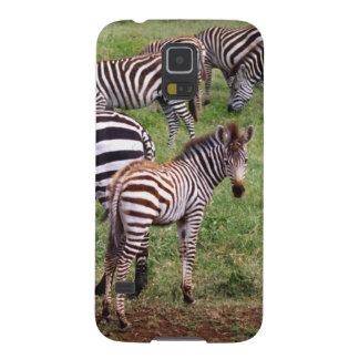 Zebras on the Serengetti Plains, Equus quagga, Galaxy S5 Cases