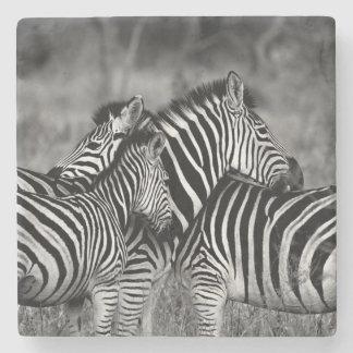 Zebras Stone Coaster