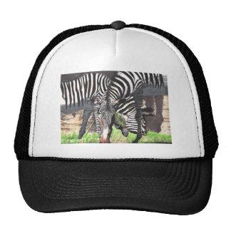 Zebras Trucker Hat