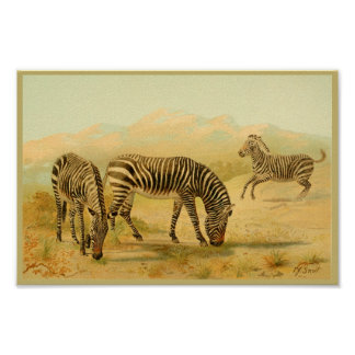 Zebras Vintage Animal Art Print African Plains