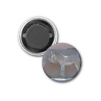 Zebroidenfohlen 1 Inch Round Magnet