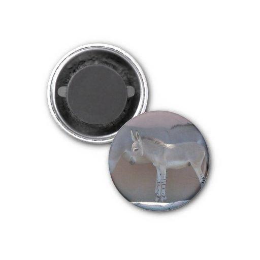 Zebroidenfohlen Magnets