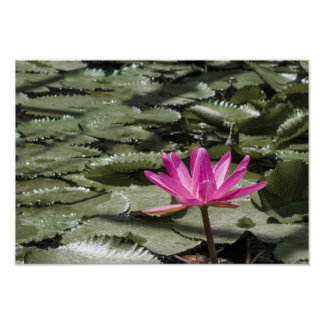 Zen Lotus Flower Pond Poster