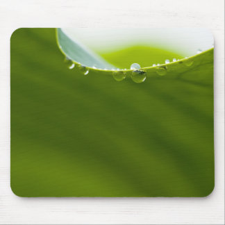 Zen Love Green Lotus Leaf  Water Drop Mouse Pad