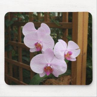 Zen orchids mouse pad