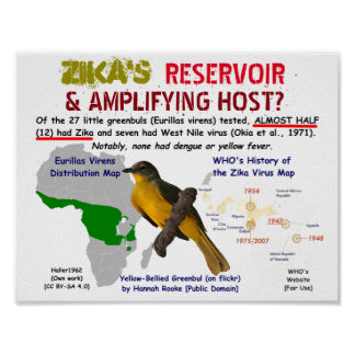 Zika's Reservoir & Amplifying Host by RoseWrites Poster