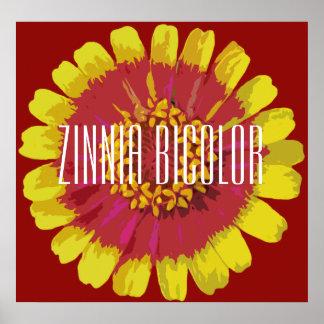 Zinnia bicolor - Poster (Matte)