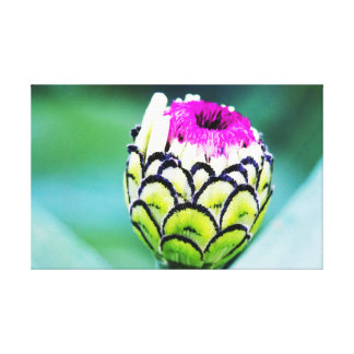 Zinnia Bud In Bloom Canvas
