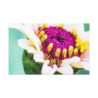 Zinnia in Bloom Canvas