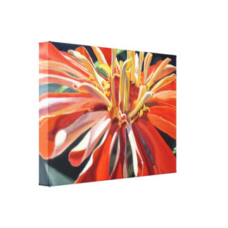 Zinnia l'Orange Canvas Print